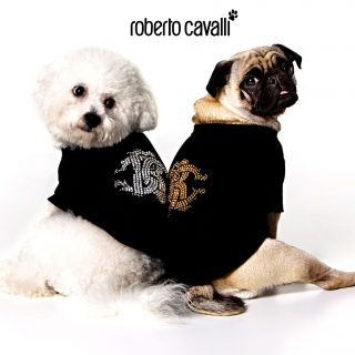 Roberto Cavalli Pet 2